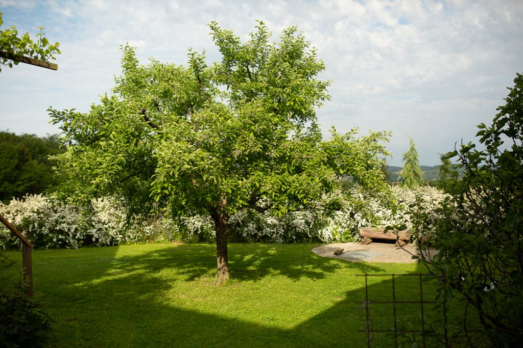 Baumkreis: Finde deinen Lebensbaum am Lindenhof