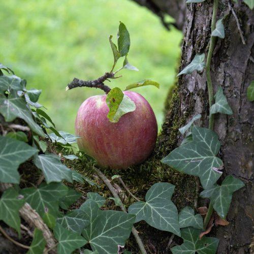 Genuss in der Steiermark, Bio Produkte am Lindenhof, Sitzwohl wohl genießen